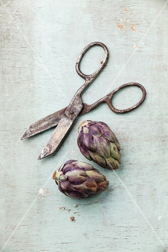Two whole artichokes and vintage scissors on rustic wooden background