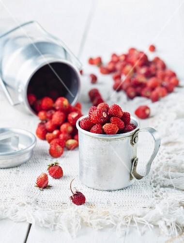 Wild strawberries in a pannikin on a table
