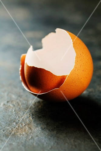 Eggs shell on dark background