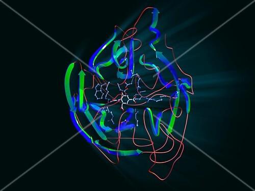 Neuraminidase,molecular model