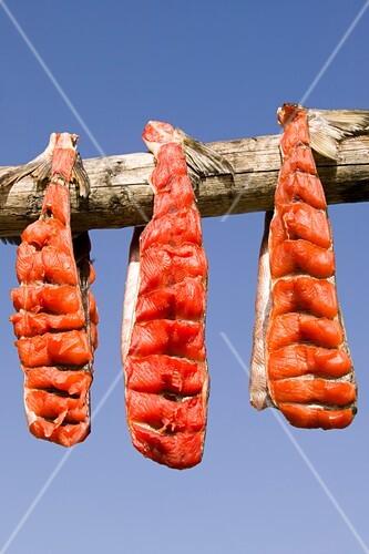 Salmon hanging to dry,Shishmaref,Alaska