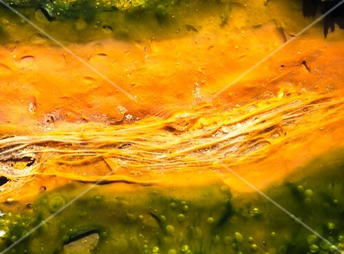 Thermophilic bacteria and algae colours