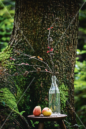 Larch branches in glass bottle in front of tree in woods