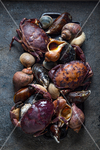 Raw seafood crabs, clams, snails … – License Images – StockFood