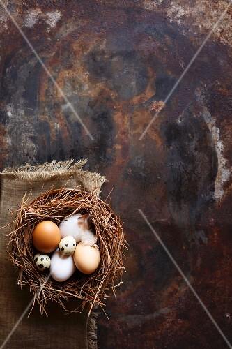 Various fresh eggs in nest