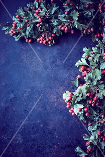 Hawthorn (crataegus) with berries