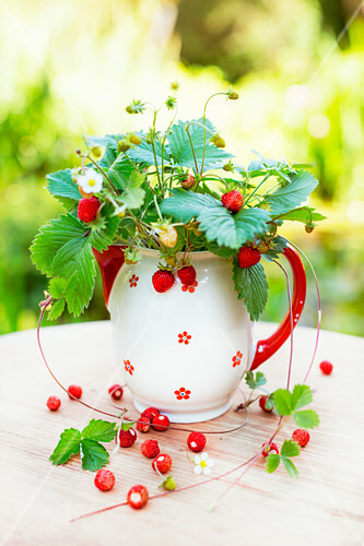 Posy of freshly picked wild strawberries in vintage ceramic jug on wooden table in garden