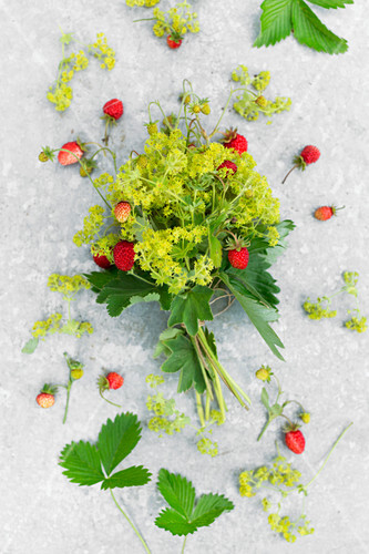 A bunch of wild strawberries with lady's mantle on a metal surface