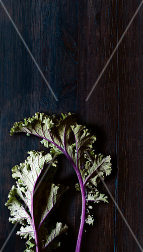 Two kale leaves with violet stems