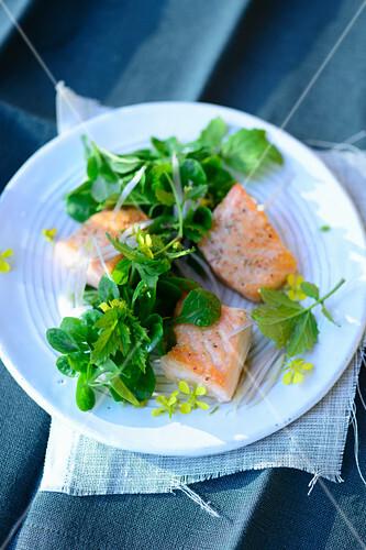 Mustard salad with wild salmon