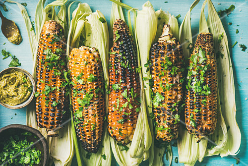 Grilled sweet corn with smoked sea salt, cilantro and pesto sauce over blue background