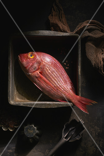 Still life of Red Snapper