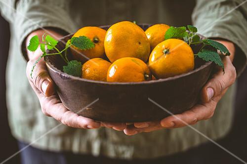 Farmer holding fresh tangerines