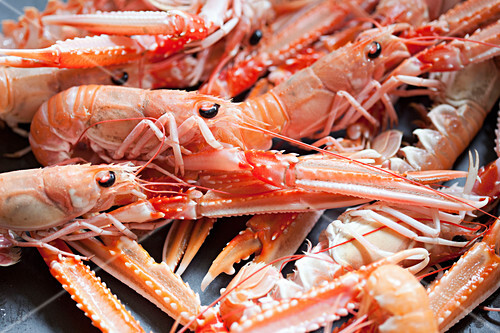 Langoustines (filling the image)