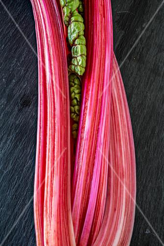 Pink chard stems (close-up)