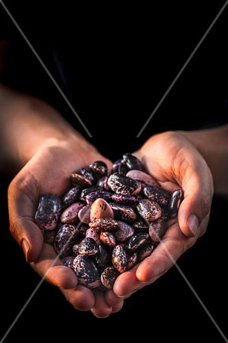 Hands holding heirloom beans