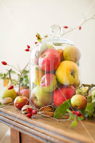 Fresh apples of different varieties harvested from an orchard under a glass bell on a wooden table