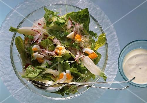 Romaine lettuce with purslane, icicle radishes, radish & eggs