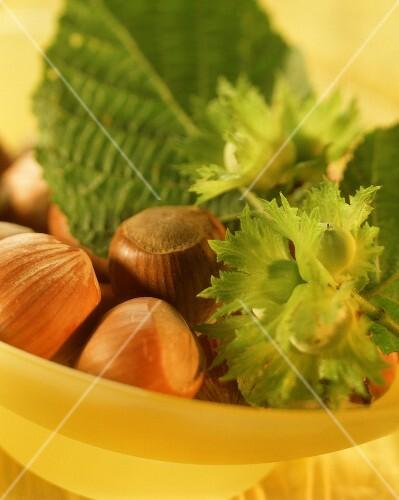 Hazelnuts with green hazelnut twig in yellow bowl