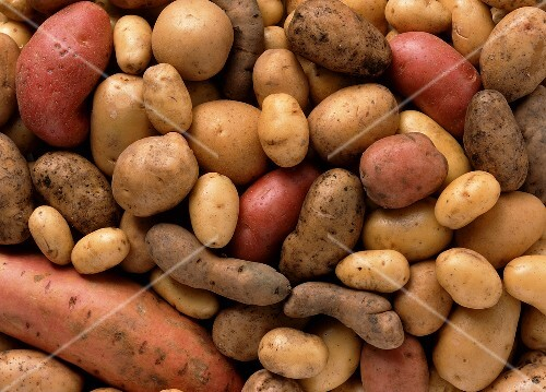 Many different potatoes (filling the picture)