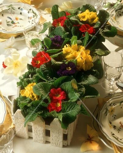 Dekorativer Blumenkasten Mit Primeln Als Bilder Kaufen 140732