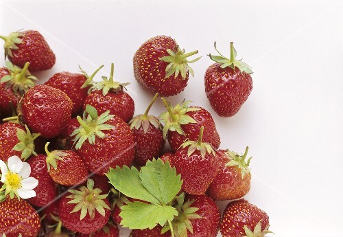 Several strawberries with strawberry flower and leaf