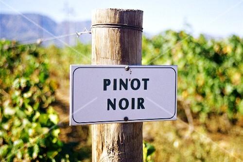 Pinot Noir-Weinberg von Weingut Bon Courage,Robertson,Afrika