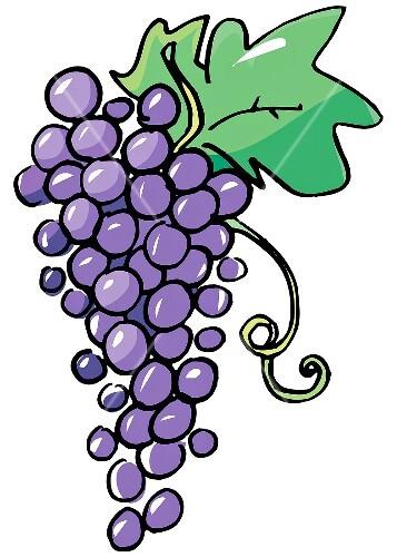Bilder Blaue Weintrauben ~ Blaue Trauben mit Blatt (Illustration) – StockFood