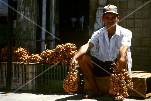 Traders with pitomba fruits (Recife, Brazil)