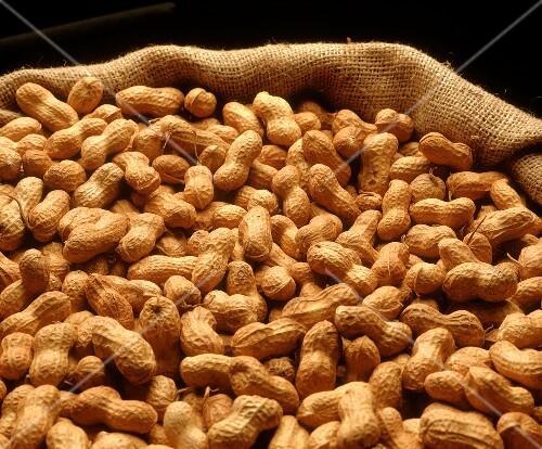 Peanuts (Arachis hypogaea) in jute sack