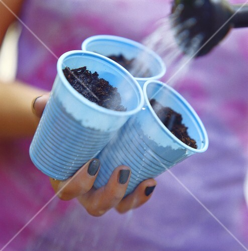 Three plant pots with seeds and compost being watered