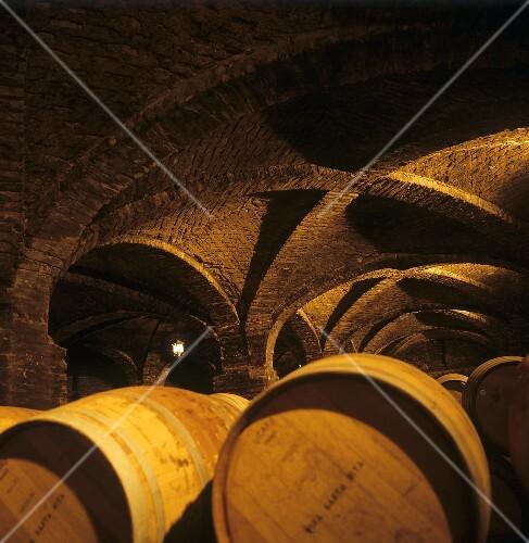Wine cellar of Santa Rita Estate, Valle del Maipo, Chile