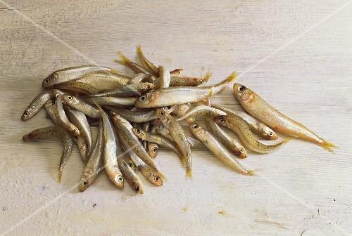 Acquadelles (Ährenfische) auf weißem Holzuntergrund