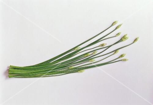 Garlic chives on white background