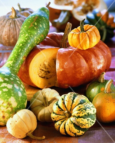Still life with various pumpkins