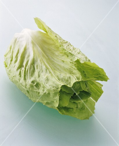 Green sugar loaf lettuce with the tip cut off