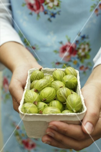 Woman holding punnet of gooseberries
