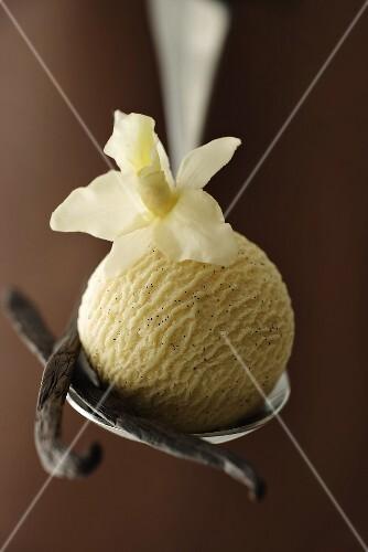 A scoop of vanilla ice cream, vanilla flower & pods on spoon