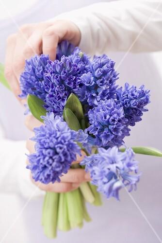 Hands holding blue hyacinths