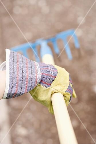 Hand in gardening glove holding rake