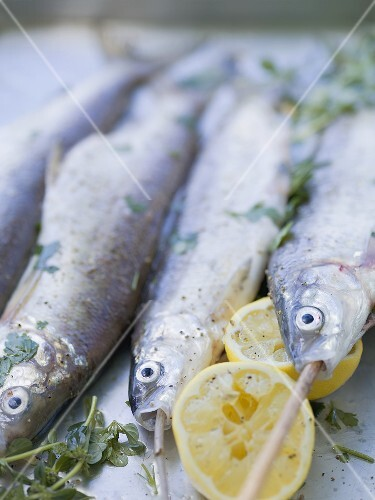 Trout with lemon halves and herbs ready for grilling
