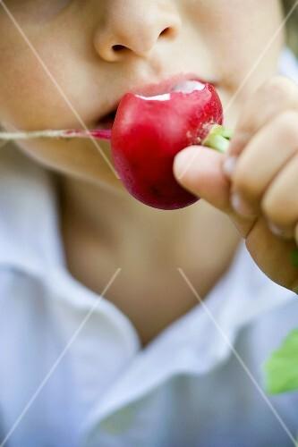 Child eating a radish