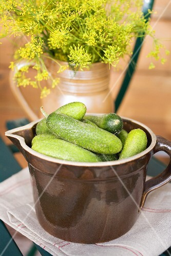 Pickling cucumbers and fresh dill in jugs