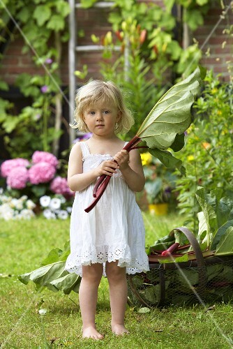 A little girl in a garden holding rhubarb