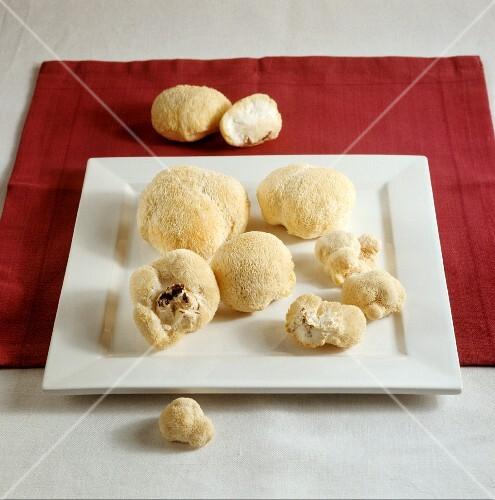 Igelstachelbart (auch Affenkopfpilz) auf Teller