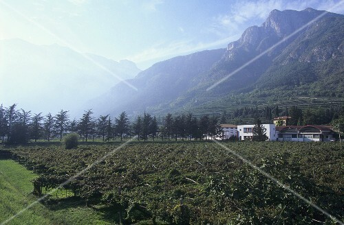 View of Avio over vineyard, Veneto, Italy