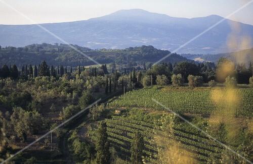 Il Greppo (birthplace of Brunello) Biondi Santi, Tuscany