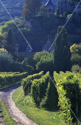 Wine village of Neustadt-Haardt, Palatinate, Germany