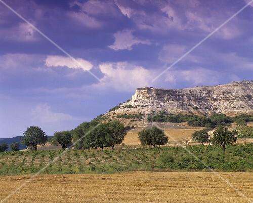 Vineyard near Penafiel, Ribera del Duero, Spain