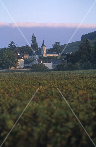 The wine commune of Aloxe-Corton, Côte d'Or, Burgundy, France